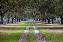 Avenue of live oaks. On plantation in south carolina Royalty Free Stock Photo