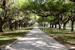 Avenue of Oaks Stock Image