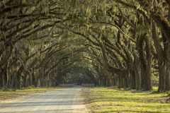 Avenue of oaks in American deep south Stock Photos