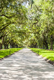 Avenue of Oaks at Boone Hall Plantation Stock Image