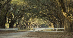 Avenue of oaks in deep south Stock Photos