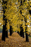 Avenue Of Trees Stock Images