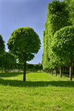 Avenue Of Trees In Well-groomed Park. Stock Photos