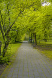 Avenue of old park. In the spring Royalty Free Stock Image