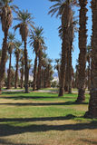 Avenue in the palm grove in the oasis Stock Photo