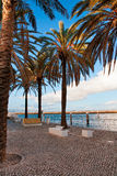 Avenue from palm trees. Palm avenue on quay of Lisbon Stock Photos