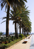 Avenue with palm trees Stock Photography