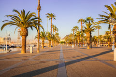 Avenue with palm trees in Barcelona. Spain Stock Photos