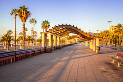 Avenue with palm trees in Barcelona. Spain Stock Photo