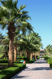 Avenue with palms in hotel Royalty Free Stock Photography