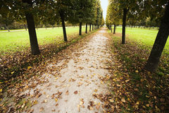 Avenue par mauvais temps d'automne Photographie stock