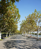 Avenue in park Royalty Free Stock Photography
