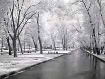 Avenue is in a park Stock Photography