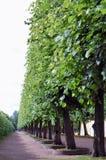Avenue in the park Stock Photos