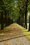 Avenue in a park in autumn. Avenue in a park on an autumn morning Royalty Free Stock Image
