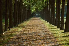 Avenue in a park in autumn. Avenue in a park on an autumn morning Royalty Free Stock Photo