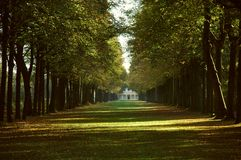 Avenue in a park in autumn Stock Photos