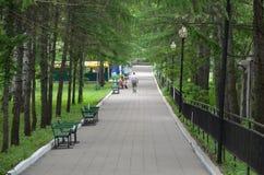 The avenue in park stock photos