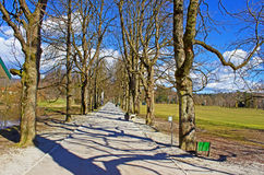 Avenue in a Park Royalty Free Stock Photography