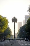 Avenue Paseo de la Reforma. In morning light, Mexico City Stock Photography
