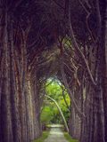 Avenue of pines on Brijuni islands Royalty Free Stock Images