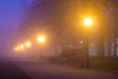 Avenue of plane trees at night, Szczecin (Stettin) City Royalty Free Stock Photo