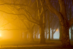 Avenue of plane trees at night, Szczecin (Stettin) City Royalty Free Stock Images