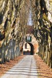 Avenue of plane trees Royalty Free Stock Image