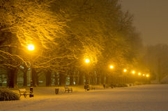Avenue of plane trees in winter, lighted lanterns Royalty Free Stock Photography