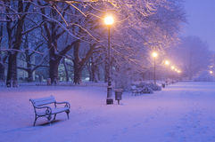 Avenue of plane trees in winter, lighted lanterns Royalty Free Stock Images