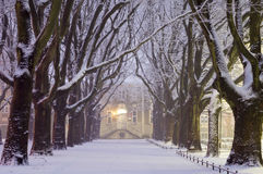 Avenue of plane trees in winter, lighted lanterns Stock Image