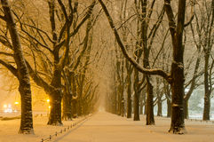 Avenue of plane trees in winter, lighted lanterns Royalty Free Stock Image