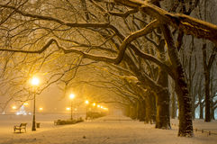 Avenue of plane trees in winter, lighted lanterns Royalty Free Stock Photo