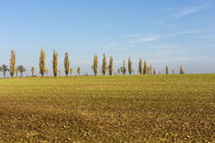 Avenue of poplars by rocky massif Lilienstein Royalty Free Stock Photo