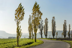 Avenue of poplars by rocky massif Lilienstein Royalty Free Stock Photography