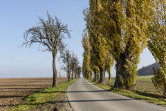 Avenue of poplars by rocky massif Lilienstein stock photography