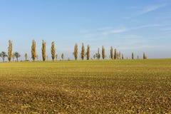 Avenue of poplars by rocky massif Lilienstein stock photo