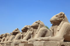Avenue of ram-headed sphinxes Stock Images