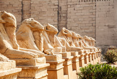 Avenue of the ram-headed Sphinxes Royalty Free Stock Photography