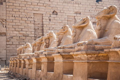 Avenue of the ram-headed Sphinxes Stock Photography