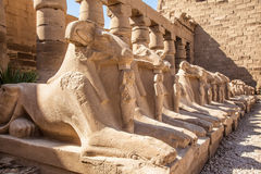 Avenue of the ram-headed Sphinxes. Karnak Temple Royalty Free Stock Photo