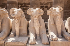 Avenue of the ram-headed Sphinxes Royalty Free Stock Image