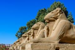 Avenue of the ram-headed Sphinxes in a Karnak Temple. Luxor, Egypt. Avenue of the ram-headed Sphinxes in Karnak Temple. Luxor, Egypt stock image