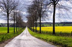Avenue through Rapeseed Fields. A tree lined avenue through fields of oilseed Royalty Free Stock Image