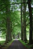 Avenue rayée par arbre Images stock