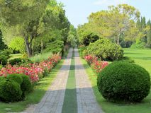 Avenue of red roses. Path of roses through the landscape park Royalty Free Stock Photos