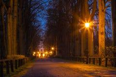 Avenue romantique de soirée des arbres Photographie stock