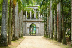 Avenue of Royal Palm Trees. Botanical Garden. Royalty Free Stock Images