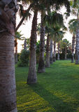 Avenue of royal palm trees at the tropical garden Royalty Free Stock Photo