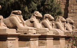 Avenue of the sphinx Royalty Free Stock Photography